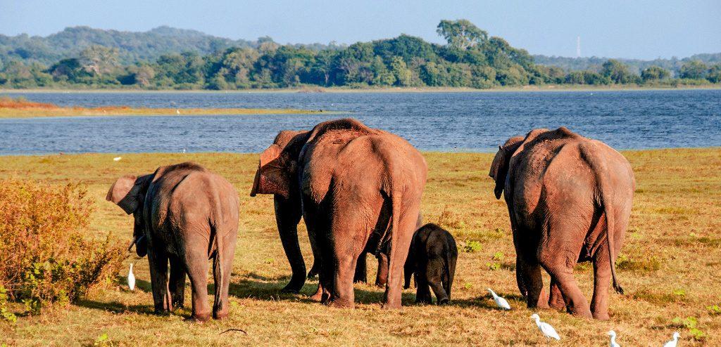 Pinnawala Elephants Orphanage